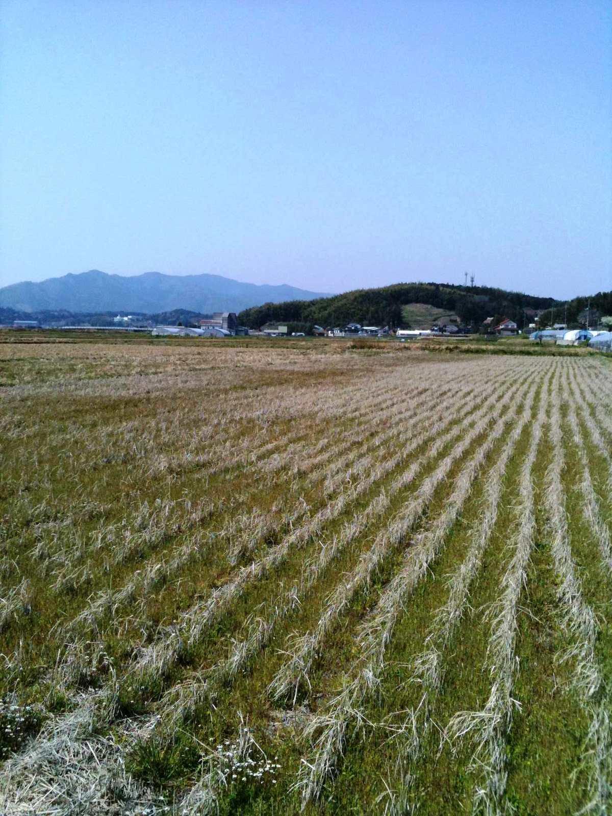 Photo_4_10_21_05_27
