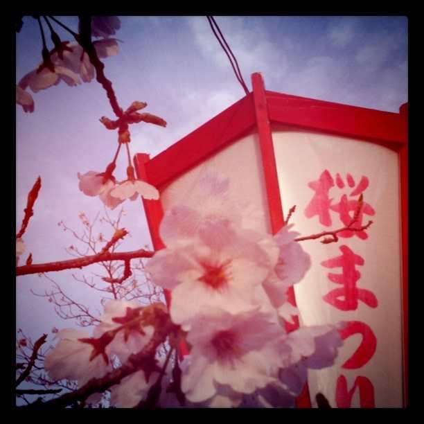 Photo_4_10_21_06_13